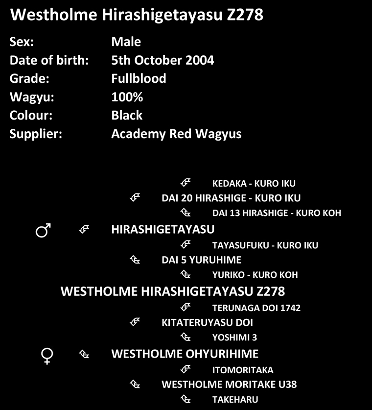 Pedigree and information about Academy Red Wagyus black wagyu bull Westholme Hirashigetayasu Z278 accredited for export of semen owned by Barbara Roberts-thomson