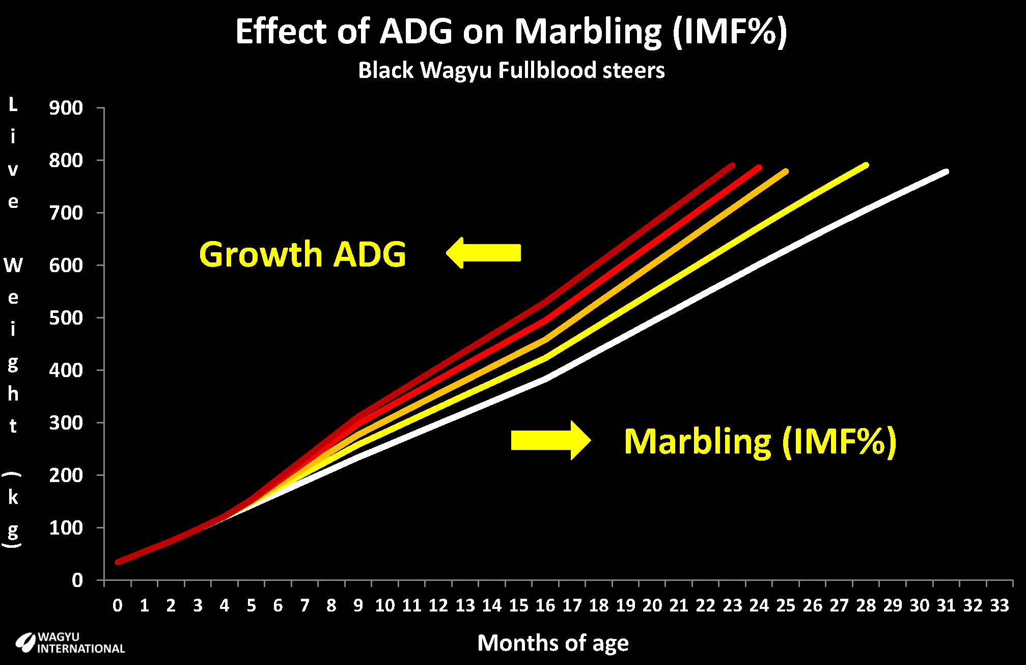 Chart showing marbling IMF% versus ADG and age of processing Wagyu