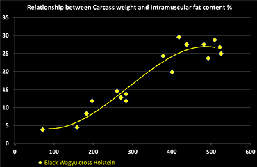 Relationship of carcass weight versus intramuscluar fat in Wagyu cross Holstein steers in chart