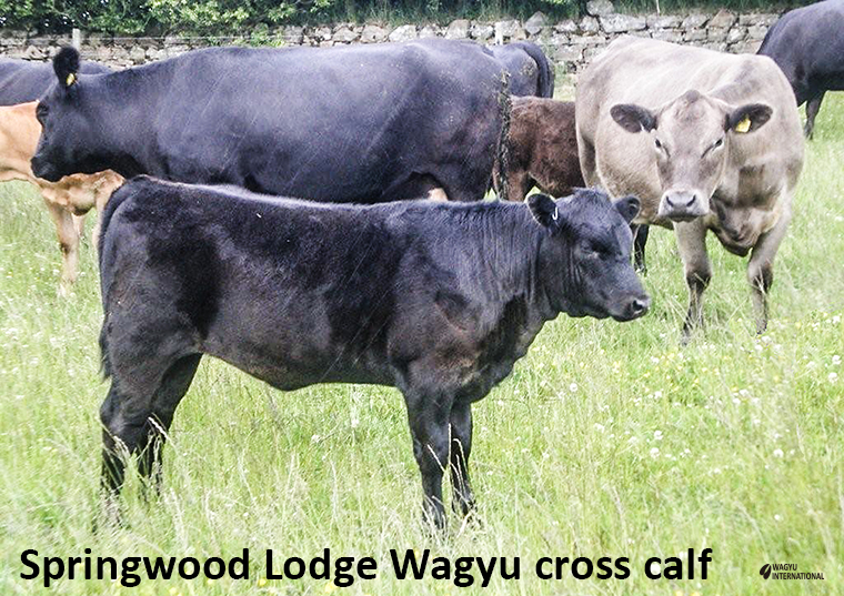 Christopher Leith Of Springwood Lodge Wagyu