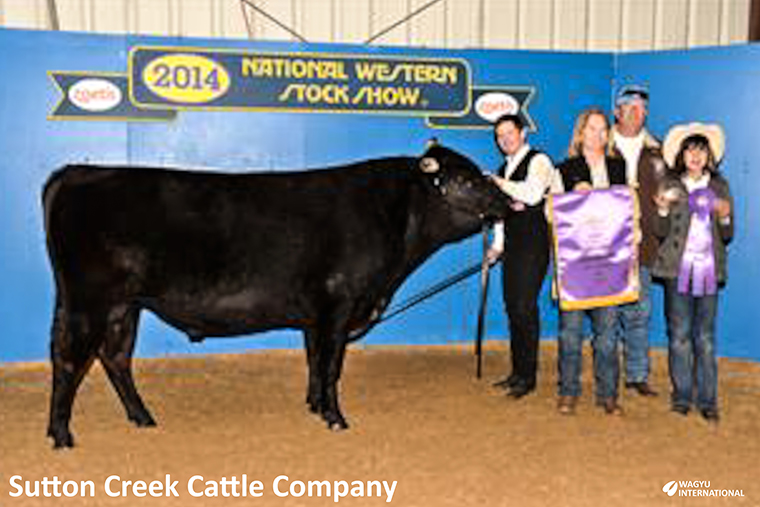 Photo of HW Itofujimiko 61Y champion black fullblood bull at National Western Stock Show 2014 owned by Ken Tew, Julie Barnes-Tew and Jeff Penick